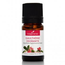 Gaulthérie odorante